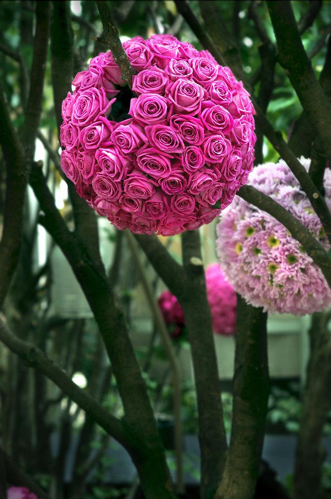 Bolas de rosas