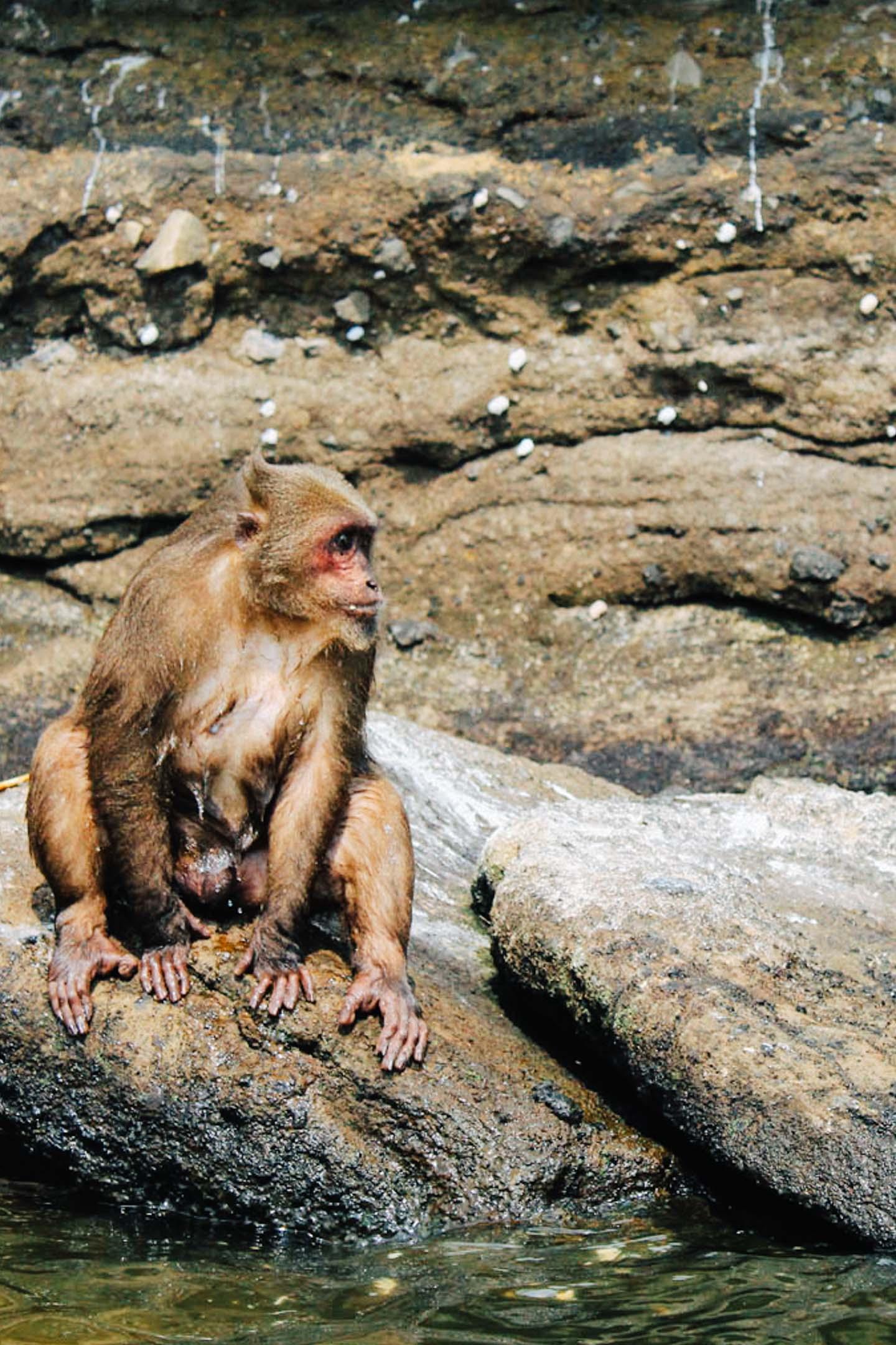 Isla de los monos en el lago de Catemaco