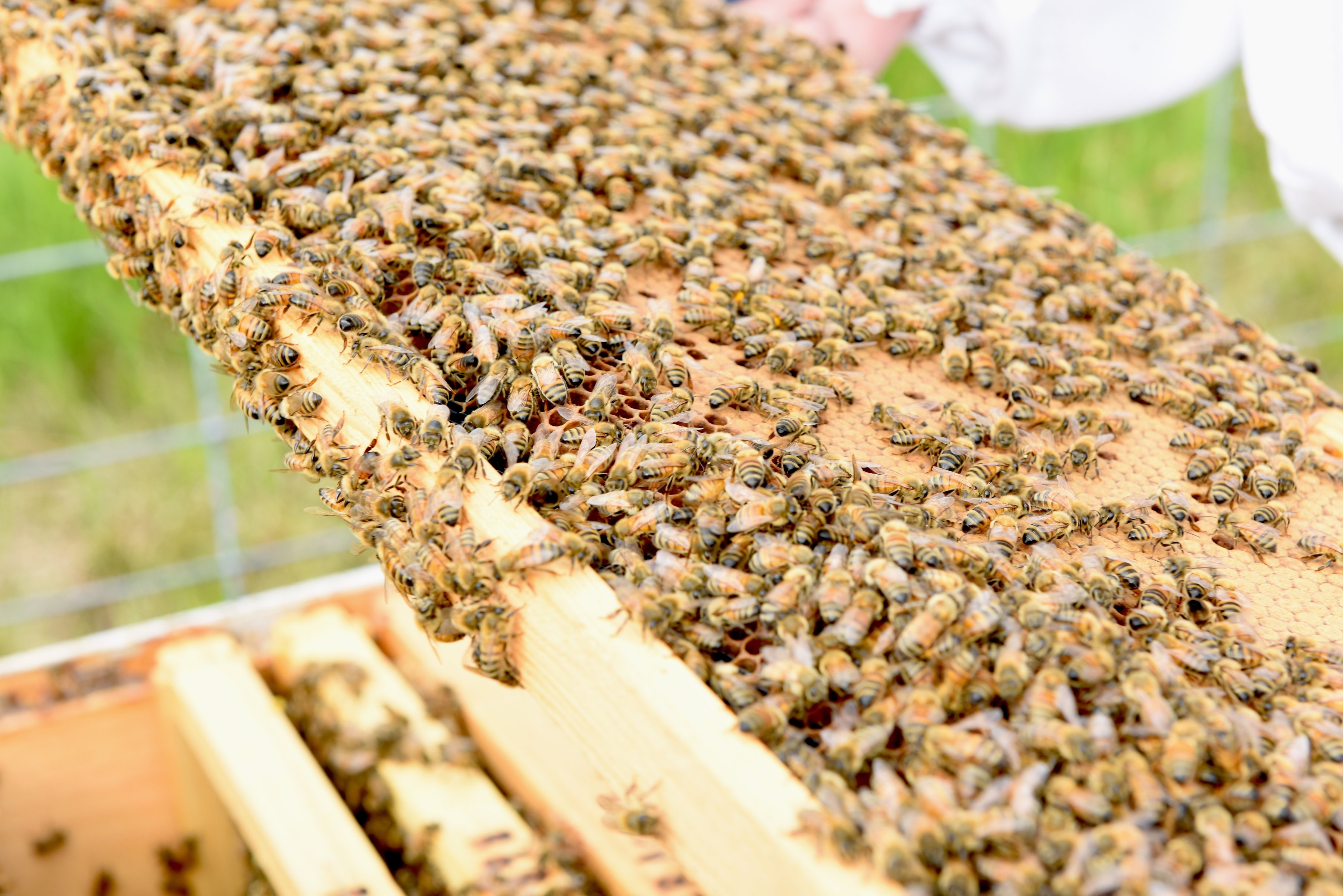 Get up close with the bees