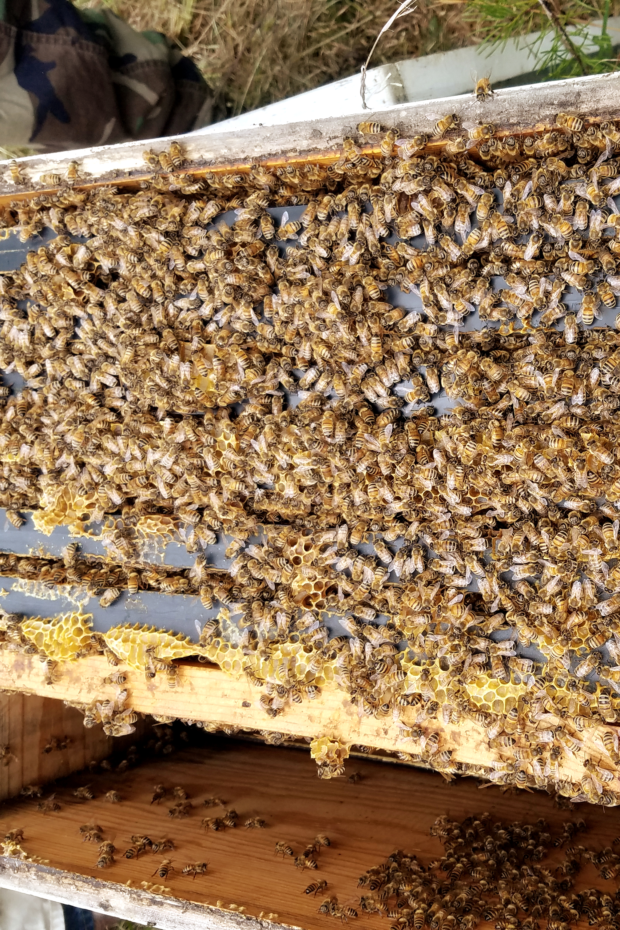 Looking inside a bee hive