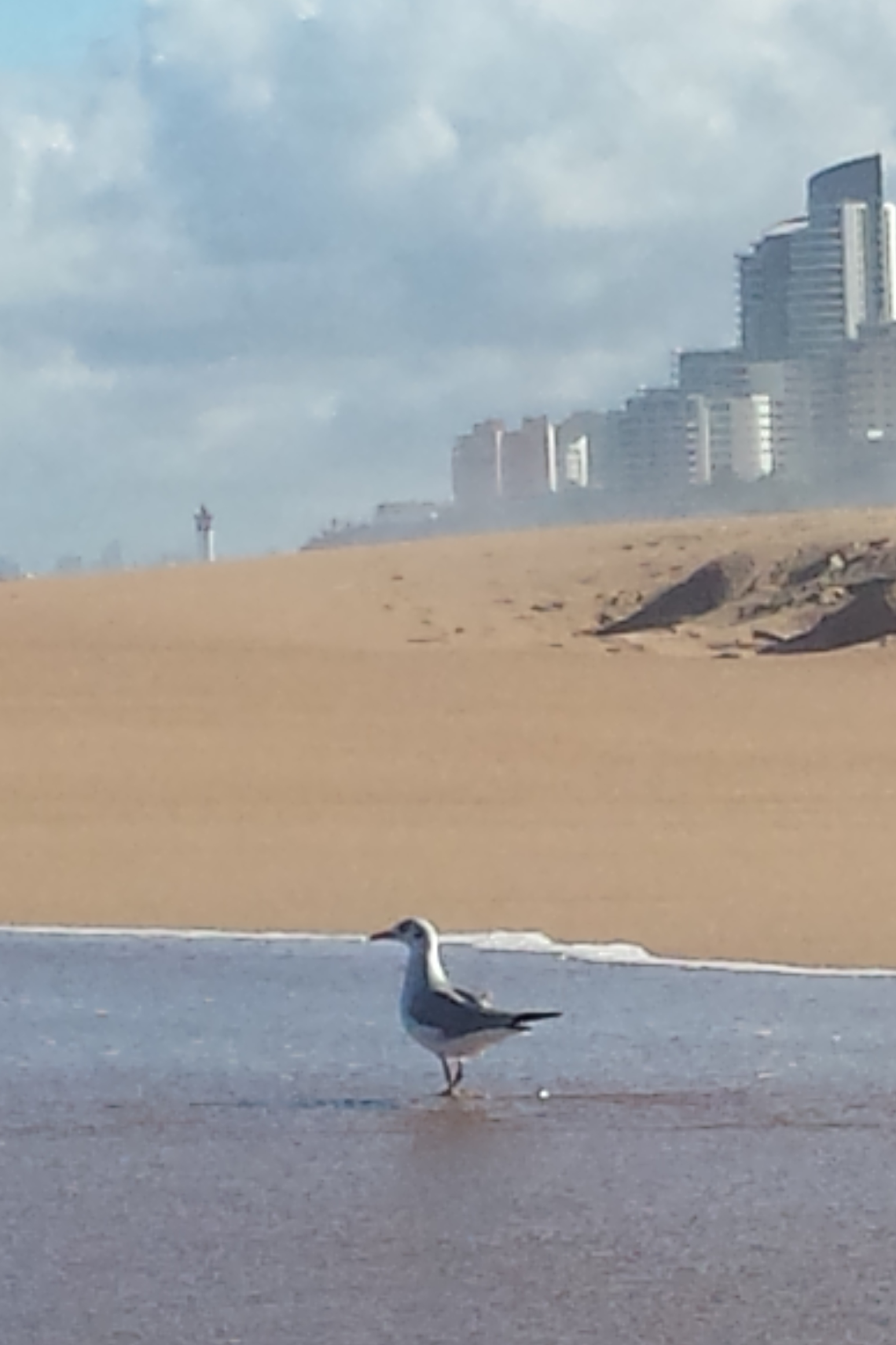View of Umhlanga from the Lagoon