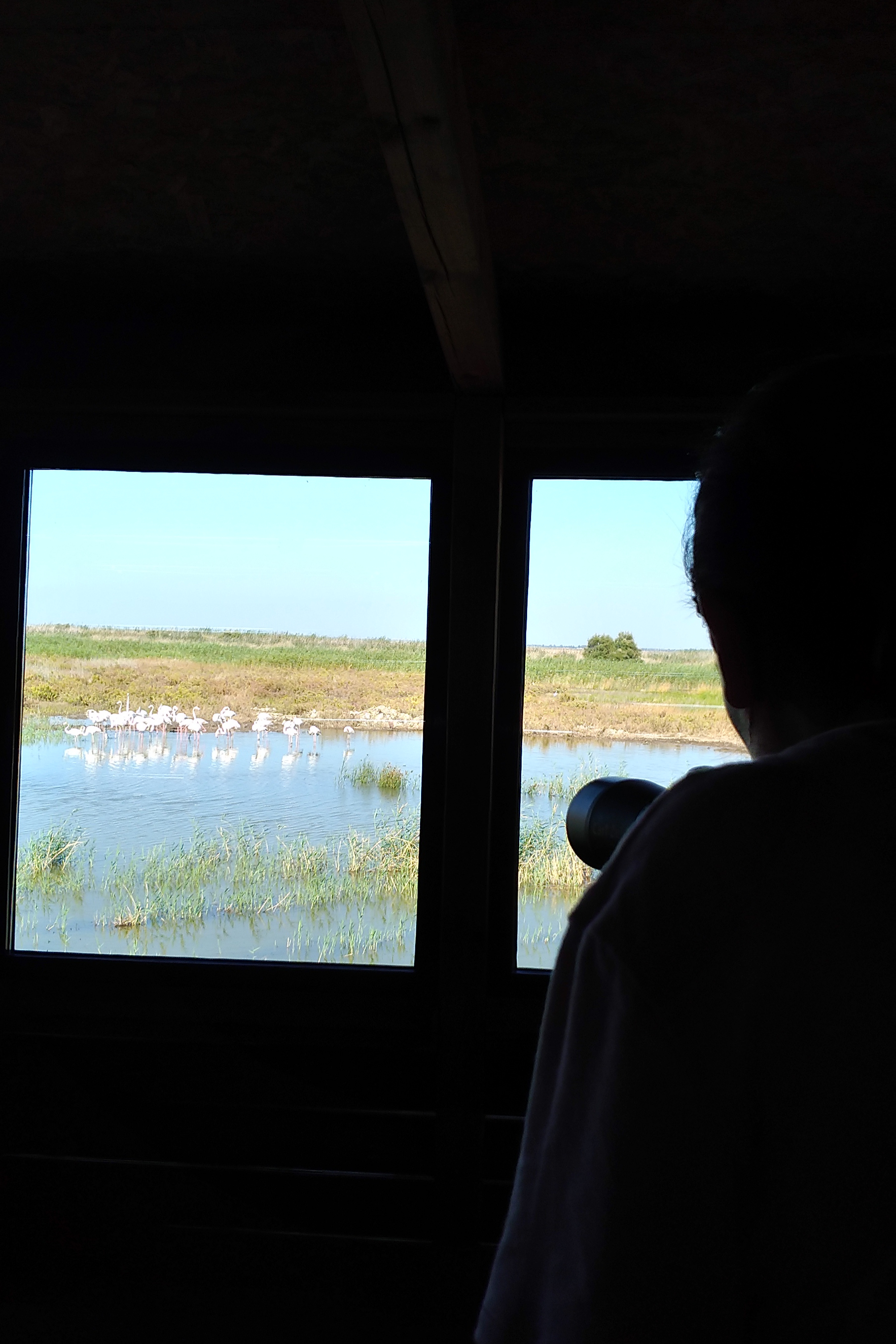Birdwatching hide with flamingos nearby