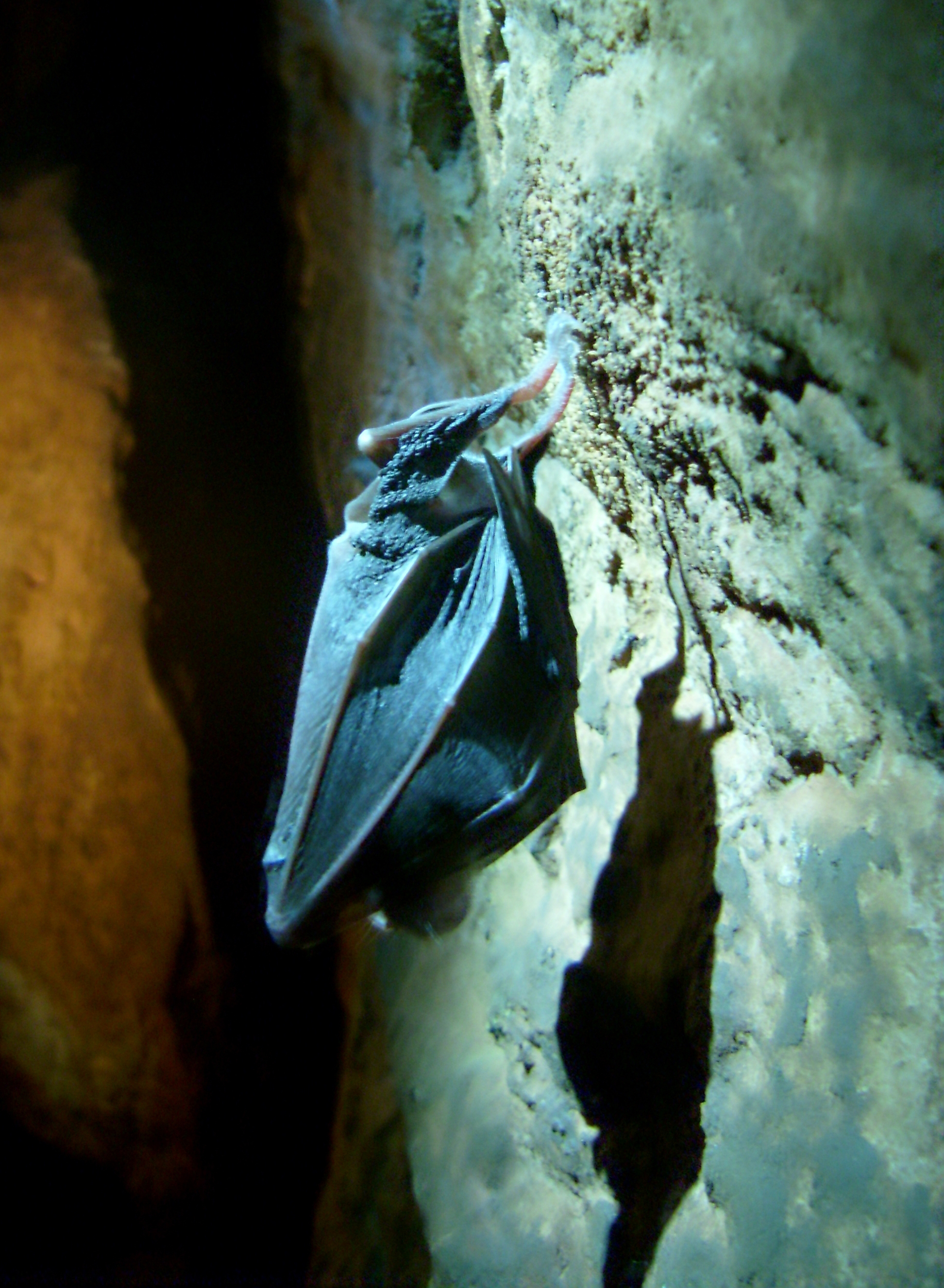 Bats survive the winter in the cave