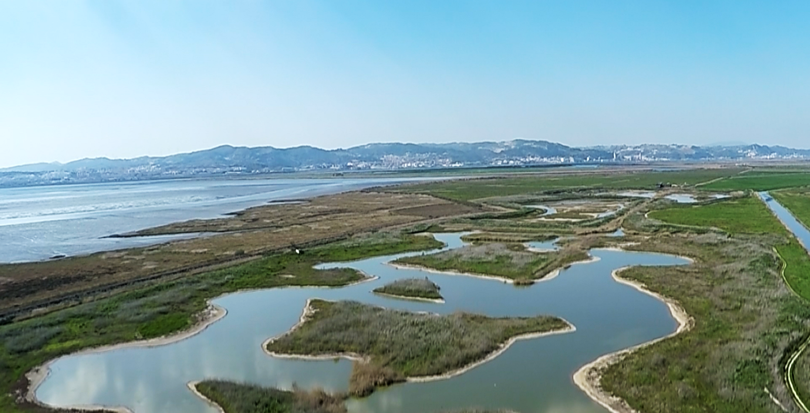 Tagus estuary wetland