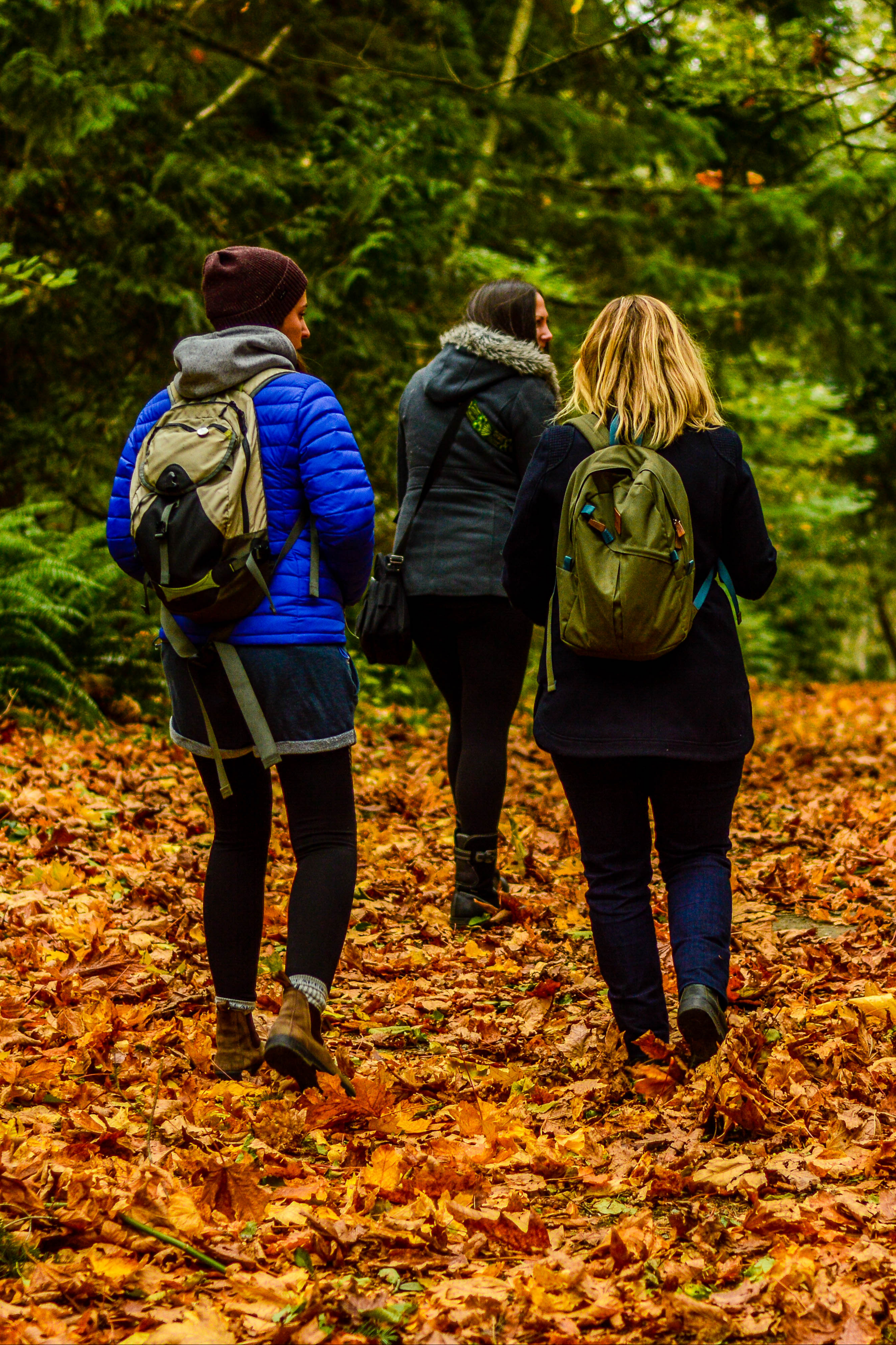 Explore old-growth forests
