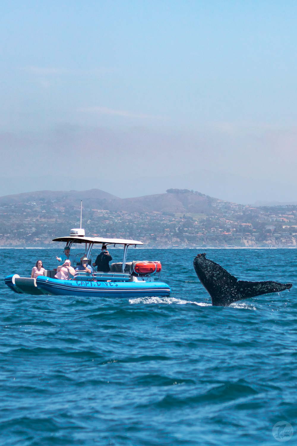 Approached by a curious whale