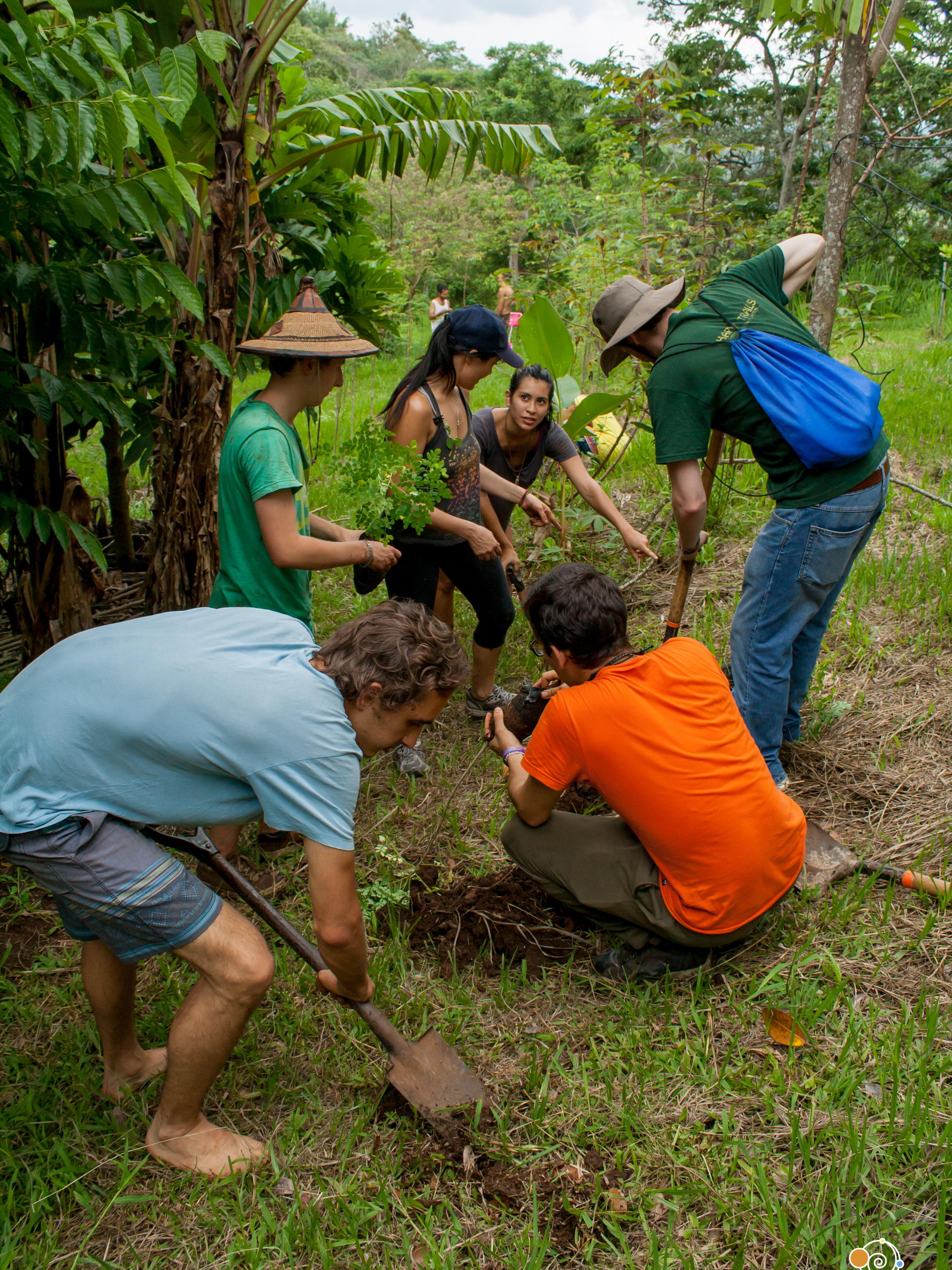 Group tree planting
