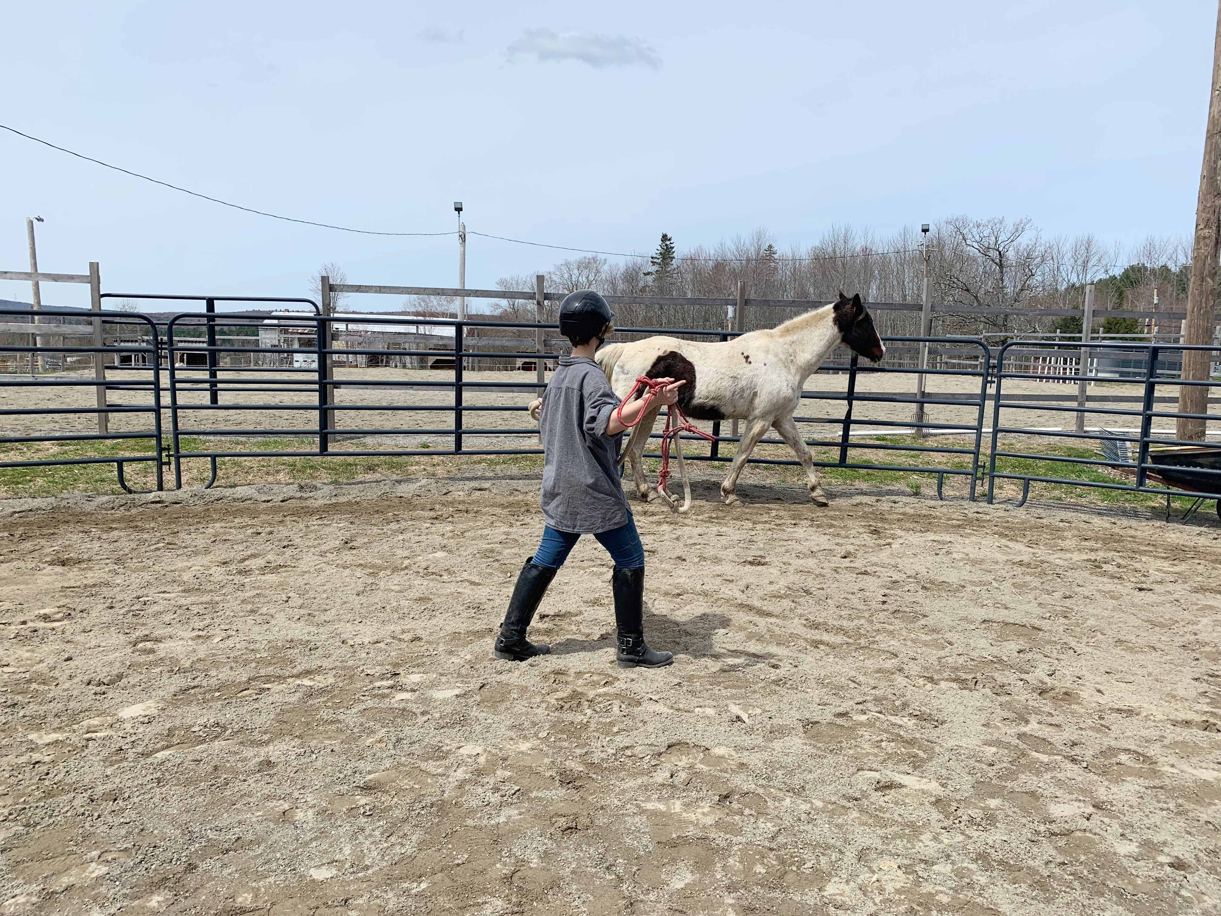 Learning the art of free lunging.