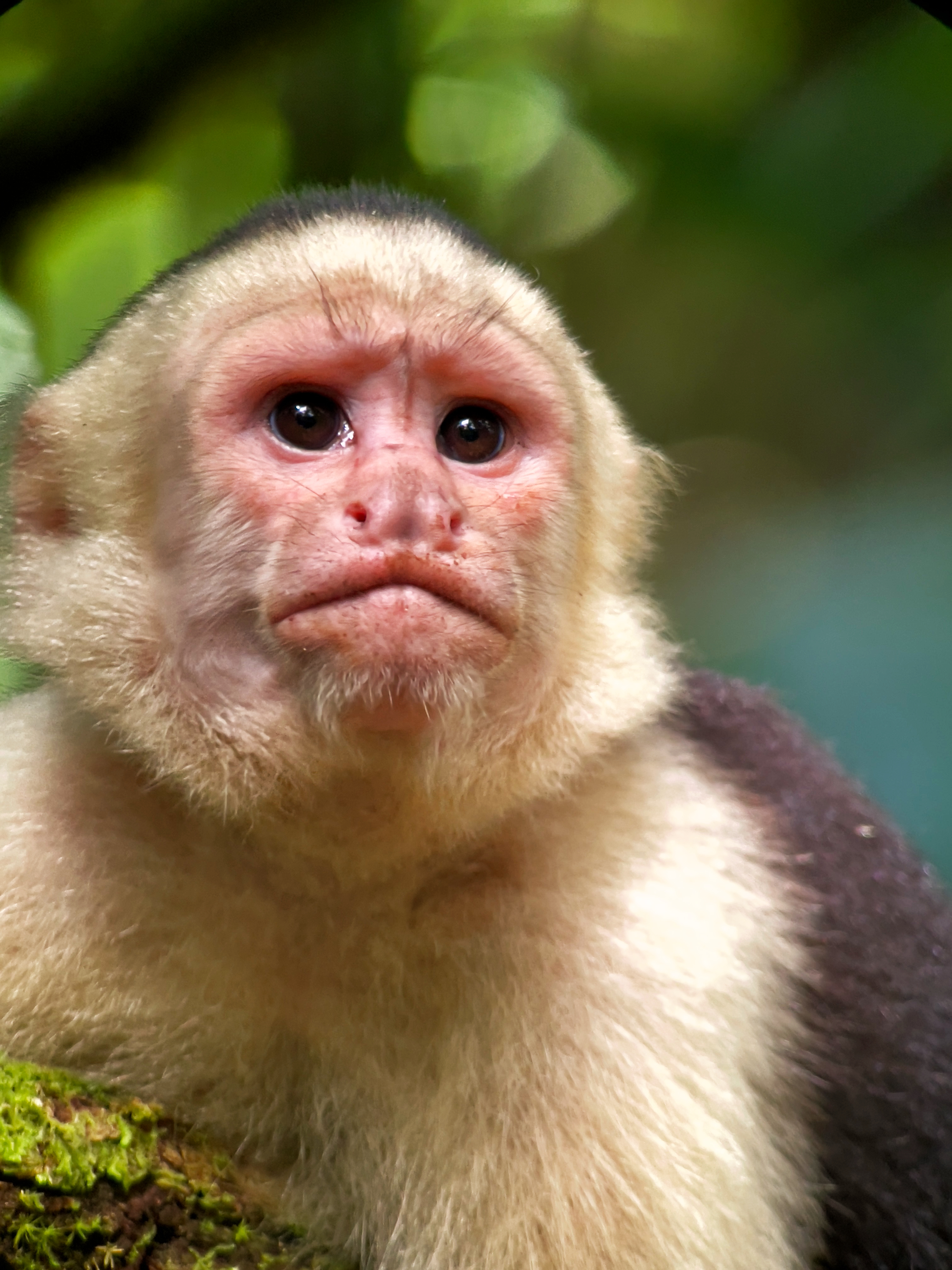 3 types of monkeys could be spot
