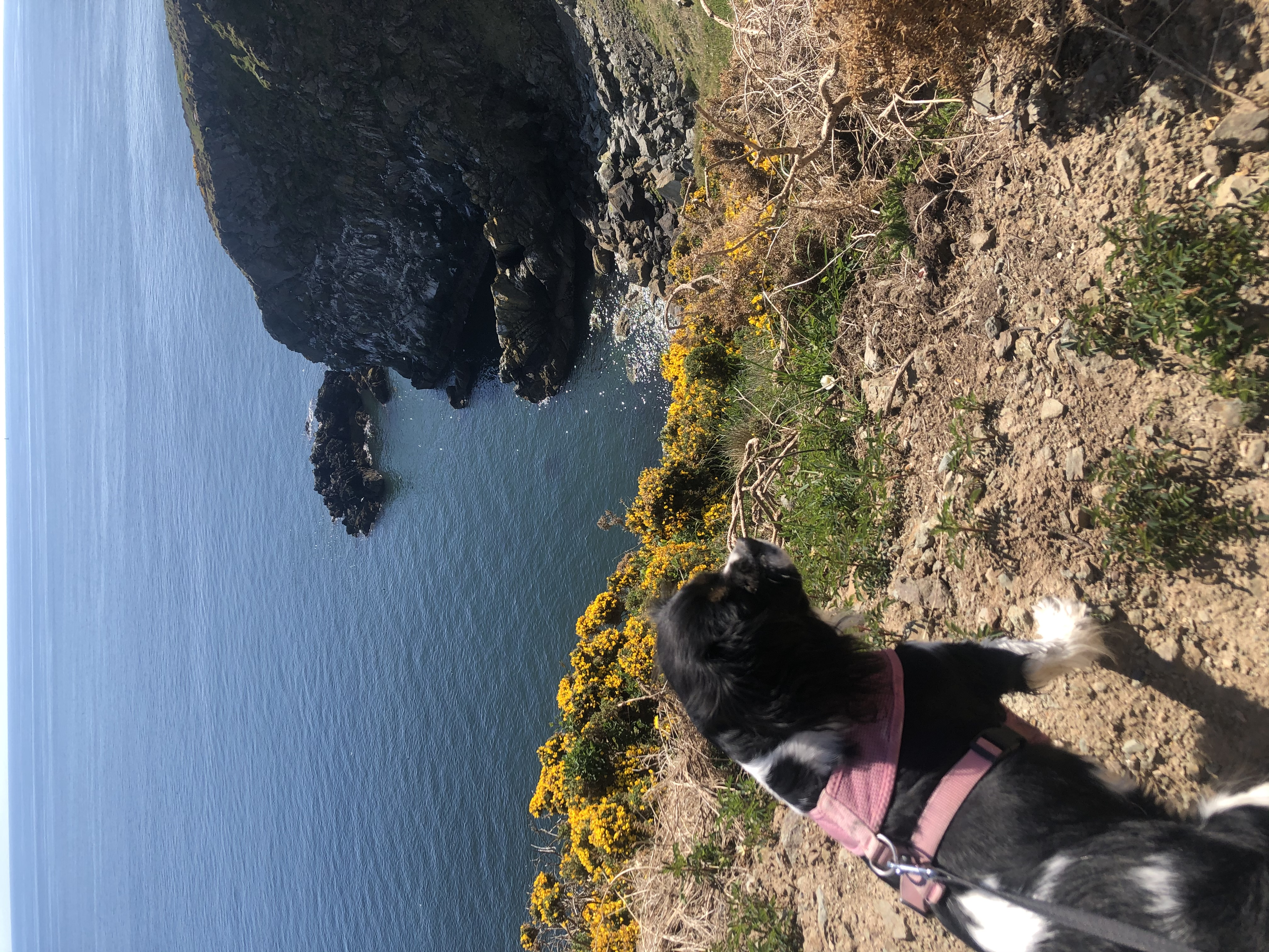 The Cliffs Of Howth
