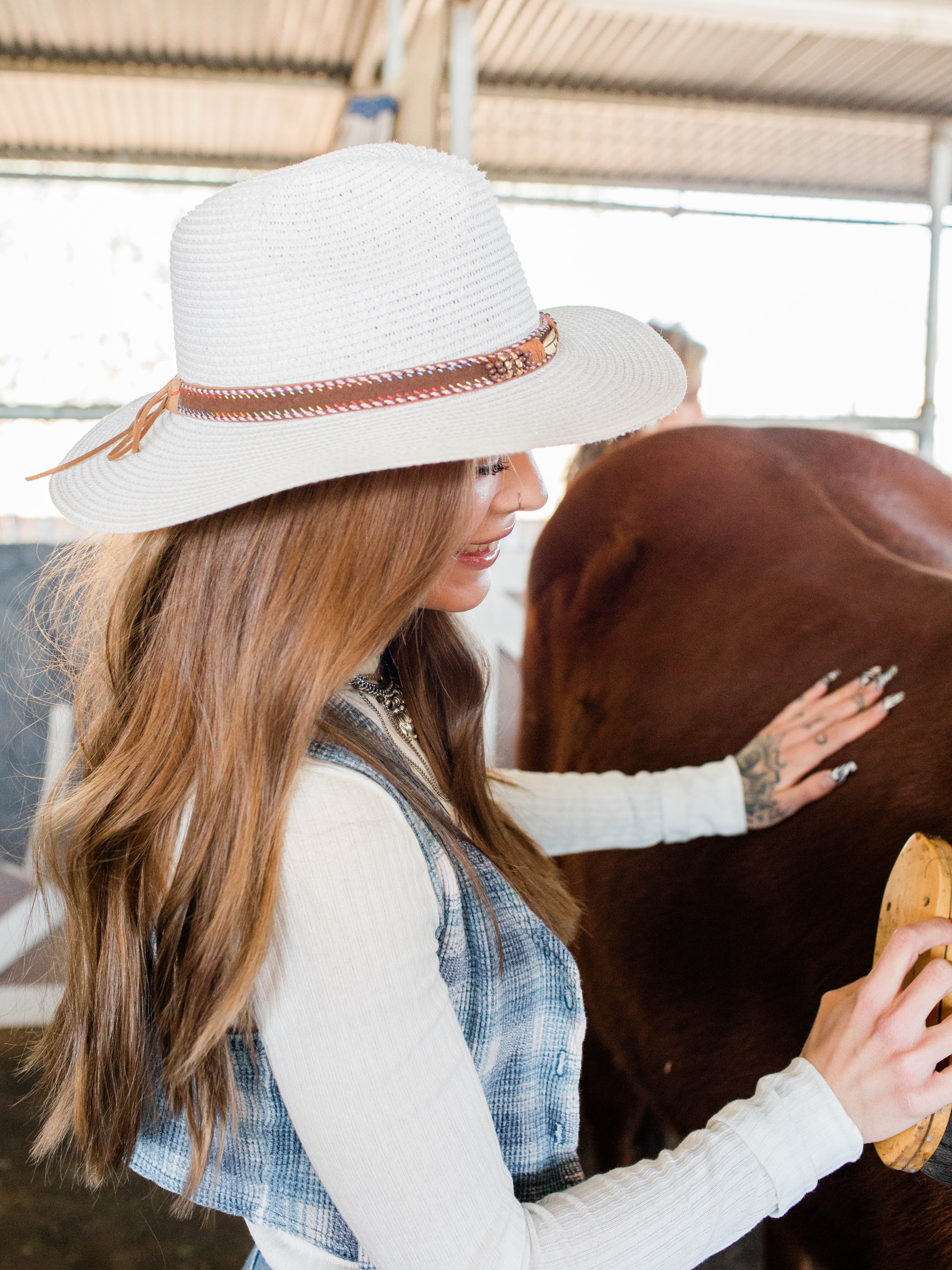 Learn how to properly groom a horse.