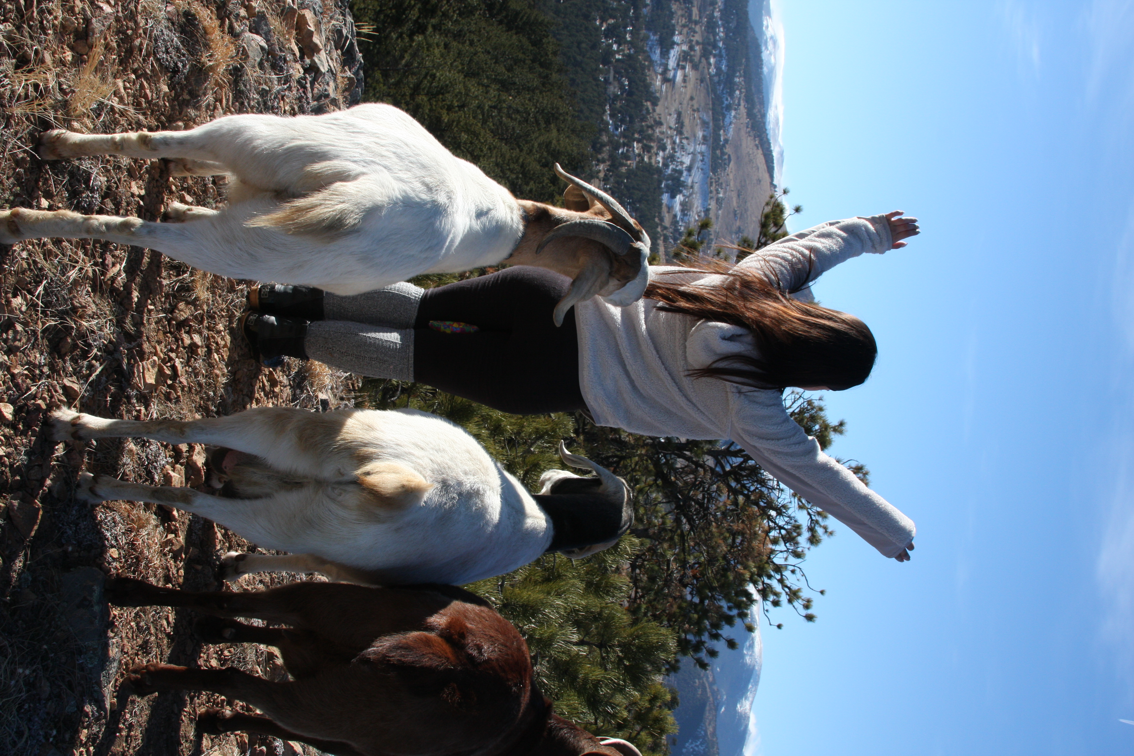 Welcoming the sun with goats.