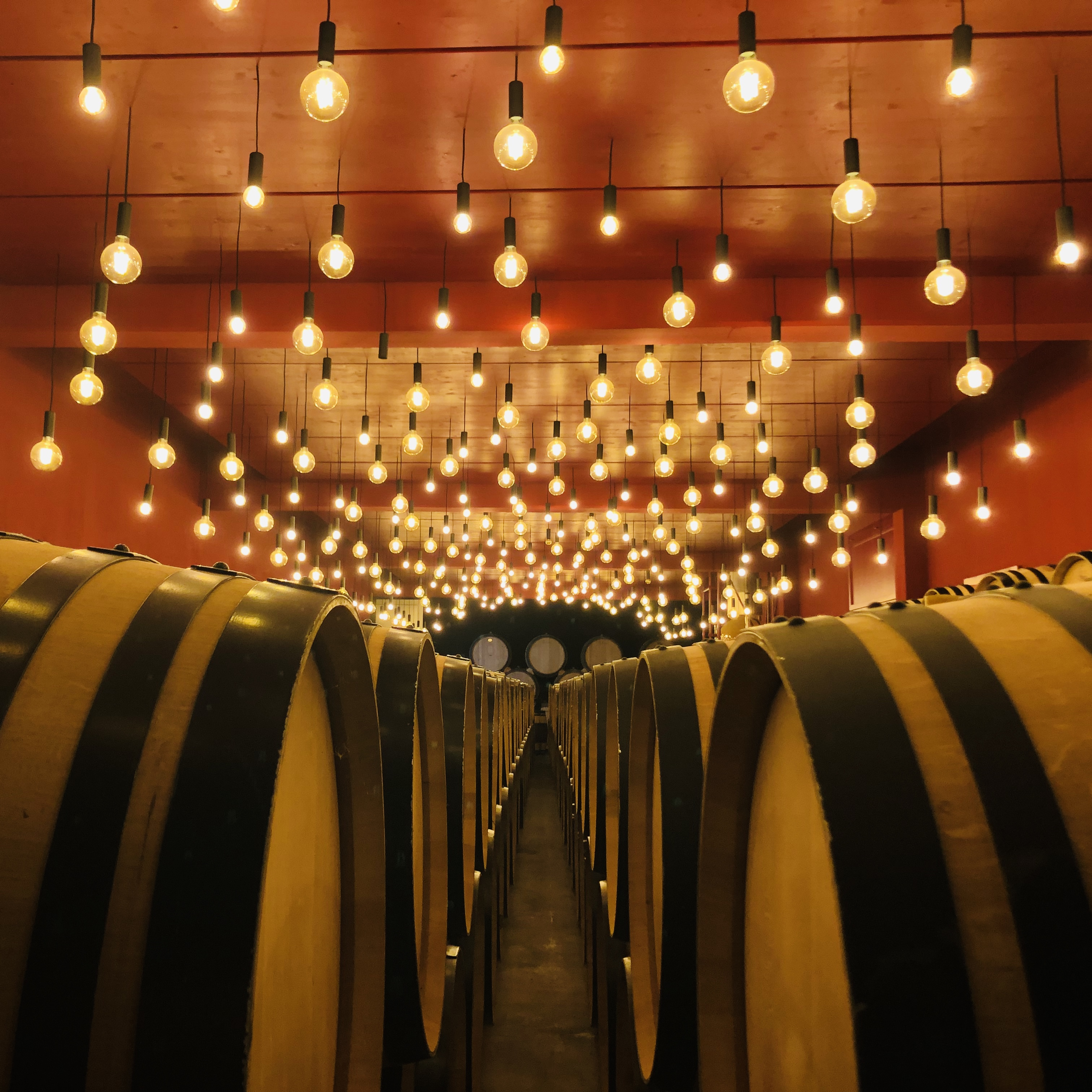 Private tour of amazing wine cellars