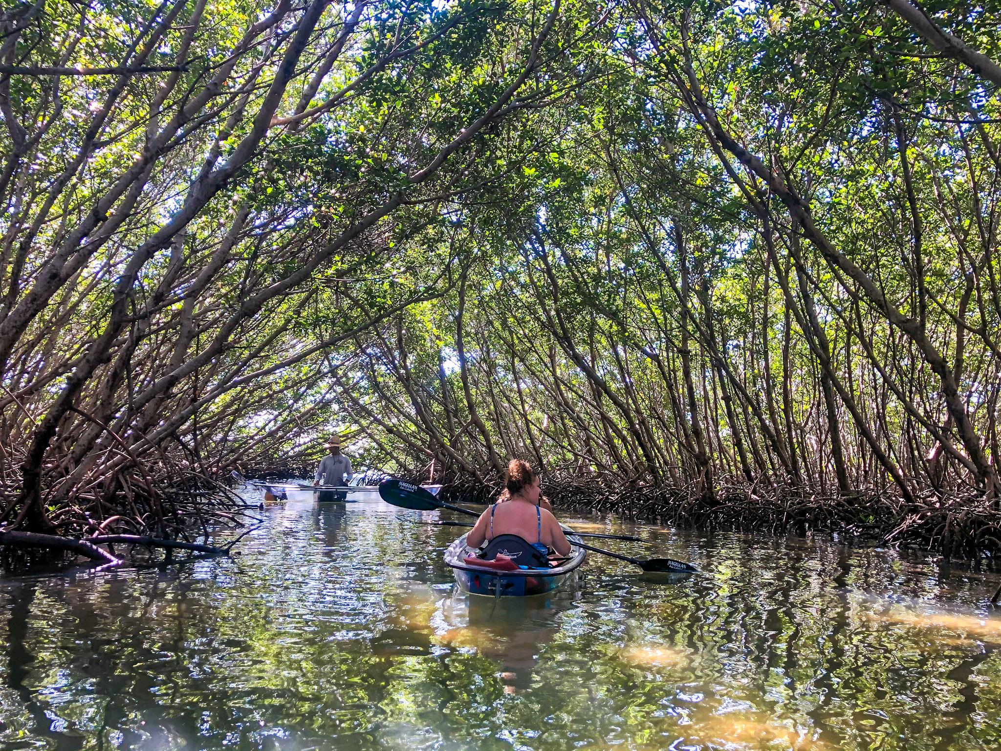 Mangrove tunnel exploration
